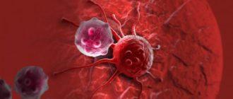 Кровоснабжение поджелудочной железы