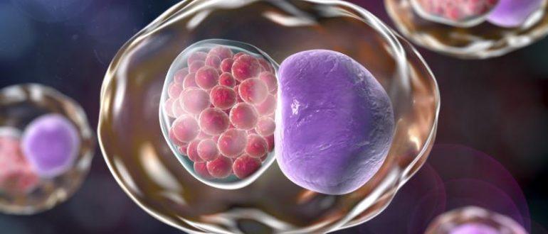 Деление клетки
